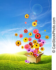 Spring Delivery 2 - Colorful flowers emerging from a...