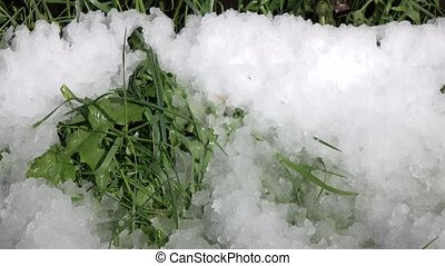 Spring drops on background of grass and snow. Time lapse