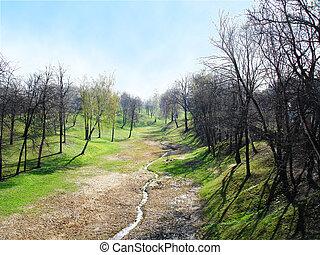 spring early mornign park