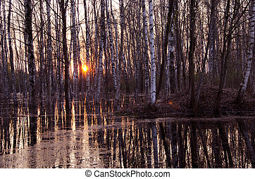 spring evening sunset in the forest