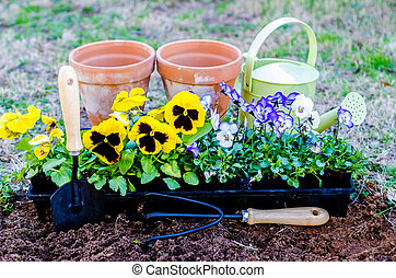 Spring fever. Pots of daisies and violas with trowel, cultivator, and watering can on cultivated soil.
