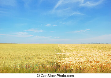 Spring field and the blue sky