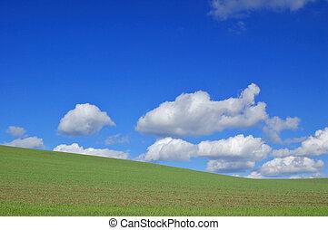 spring field - field in spring