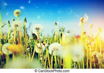 Spring field with flowers, dandelions in fresh grass. Sun on blue sky