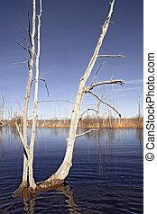 spring flood in dry oak wood