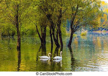 Spring Flood in Lago de Fusine - Spring Flood. The lake Lago...