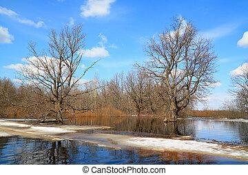 spring flood in oak wood