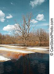spring flood in wood