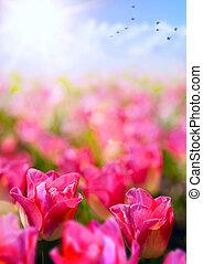 spring floral background; fresh tulip flower on blue sky background