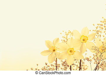 Spring floral border, beautiful fresh narcissus flowers, on...