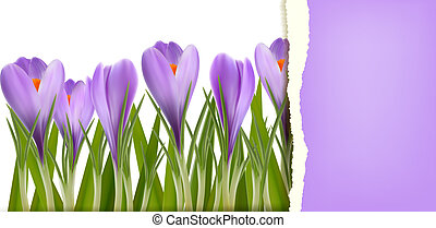 Spring flower background with ripped paper Vector...