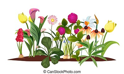 Spring flower bed. Garden, blossom flowers. Isolated tulips and lily vector illustration. Blossom spring, tulip flower, garden bloom grow