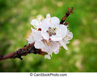 Spring flower. Composition of nature.