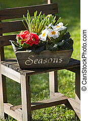 Spring flower decoration in garden with primroses - Simple...