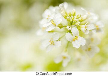 spring flower in garden with shallow focus