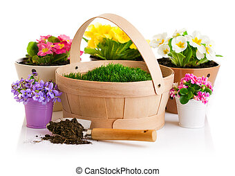 spring flower in pot with green grass basket