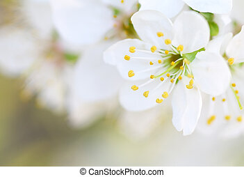 Spring flower on tree.