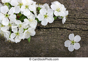 Spring  flower on wood background