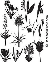 Spring flower set - Set silhouette image of spring bulbous...