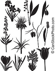 Spring flower set - Set silhouette image of spring bulbous...
