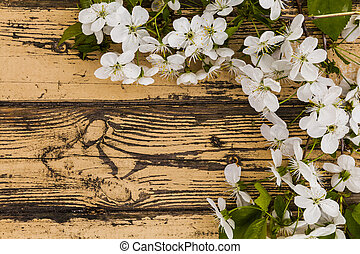 Spring flowering branch on wooden background. Cherry blossom