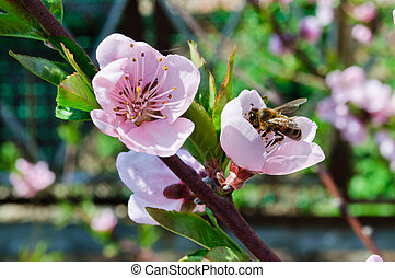 Bee pollinating flowers