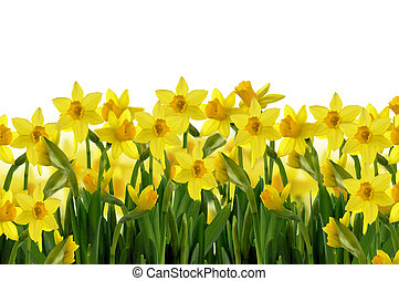 spring flowers - abstract background of yellow spring ...