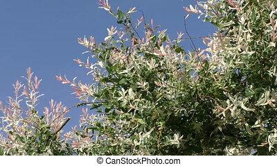 Spring flowers against blue sky