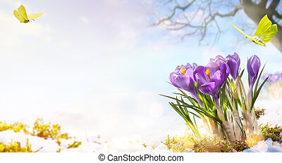 spring flowers and flight butterfly on spring meadow background;