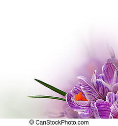Spring flowers background - beautiful floral border