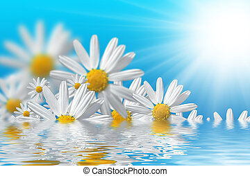 Spring flowers background - Fresh daisy in water and blue ...