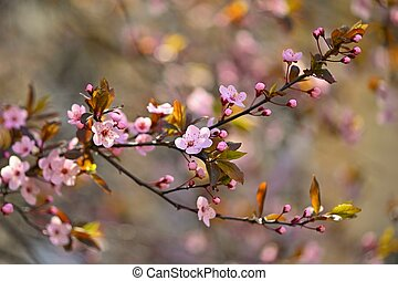 Spring flowers. Beautifully blossoming tree branch. Cherry - Sakura and sun with a natural colored background. Springtime season.