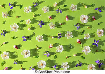 Spring flowers blossoms on paper background