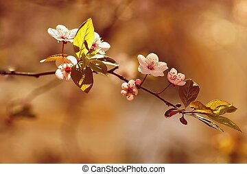 Spring flowers. Colorful nature. Seasonal concept for springtime. Beautifully blossoming tree branch. Cherry - Sakura and sun with a natural colored background.