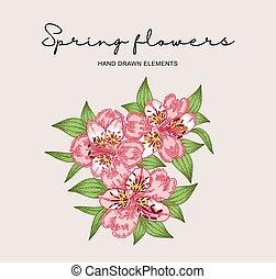 Spring flowers composition. Hand drawn alstroemeria flowers...