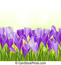 Spring flowers crocus seamless pattern horizontal border.