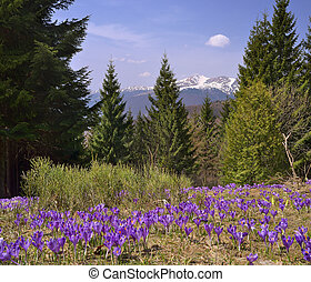 Spring flowers in a mountain forest