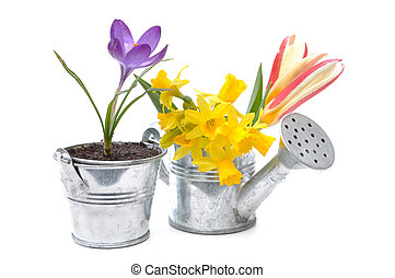 spring flowers in a watering pot and metal