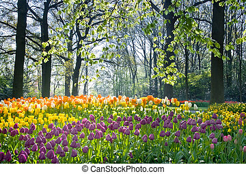 Spring flowers in april light - Spring flowers tulips and...