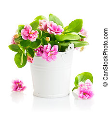 Spring flowers in bucket