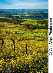 Spring flowers in Eastern Oregon - Spring flowers near the ...