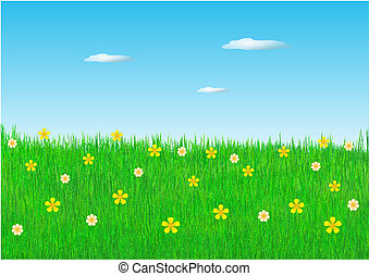 Spring flowers in field
