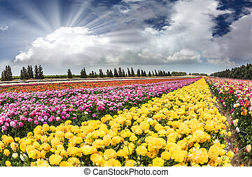 Spring Flowers in Israeli kibbutz. Picturesque field of...