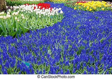 Spring Flowers in Keukenhof Garden, Netherlands