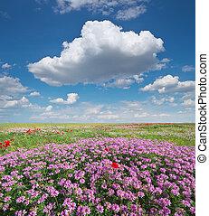 Spring flowers in meadow.