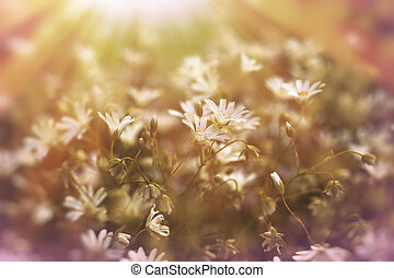 Spring flowers in meadow lit by afternoon sunlight