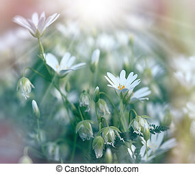 Spring flowers in meadow lit by sun rays