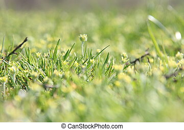 Spring flowers in meadow. Nature composition.