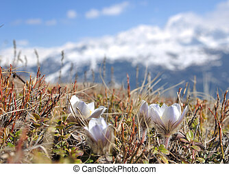 spring flowers in mountain