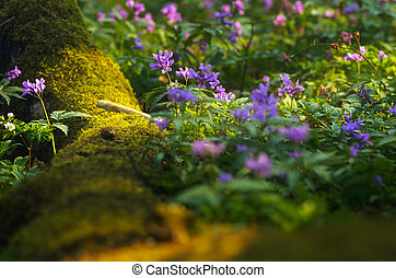 Spring flowers in the forest